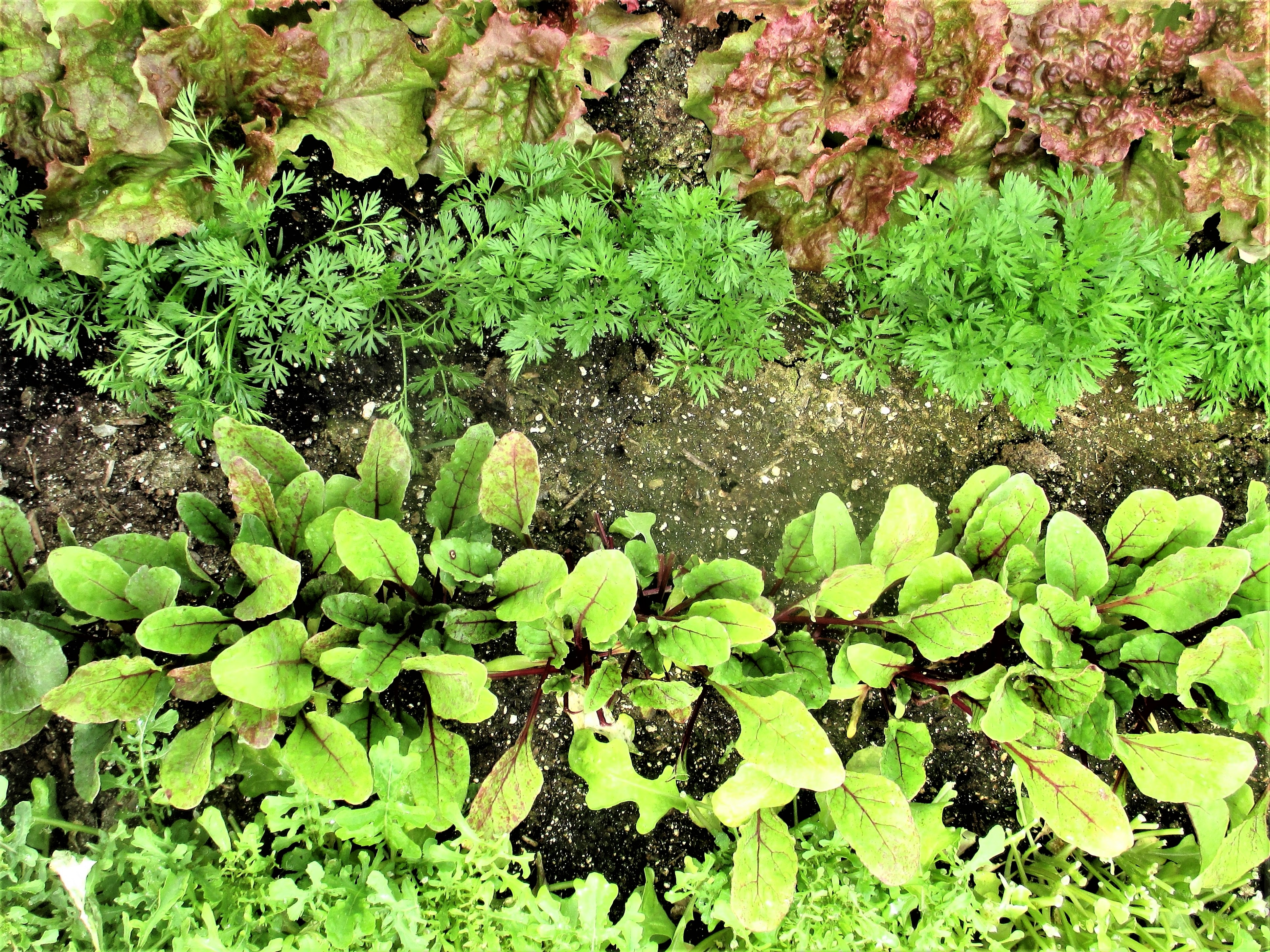Companion Planting | Iowa Herbalist