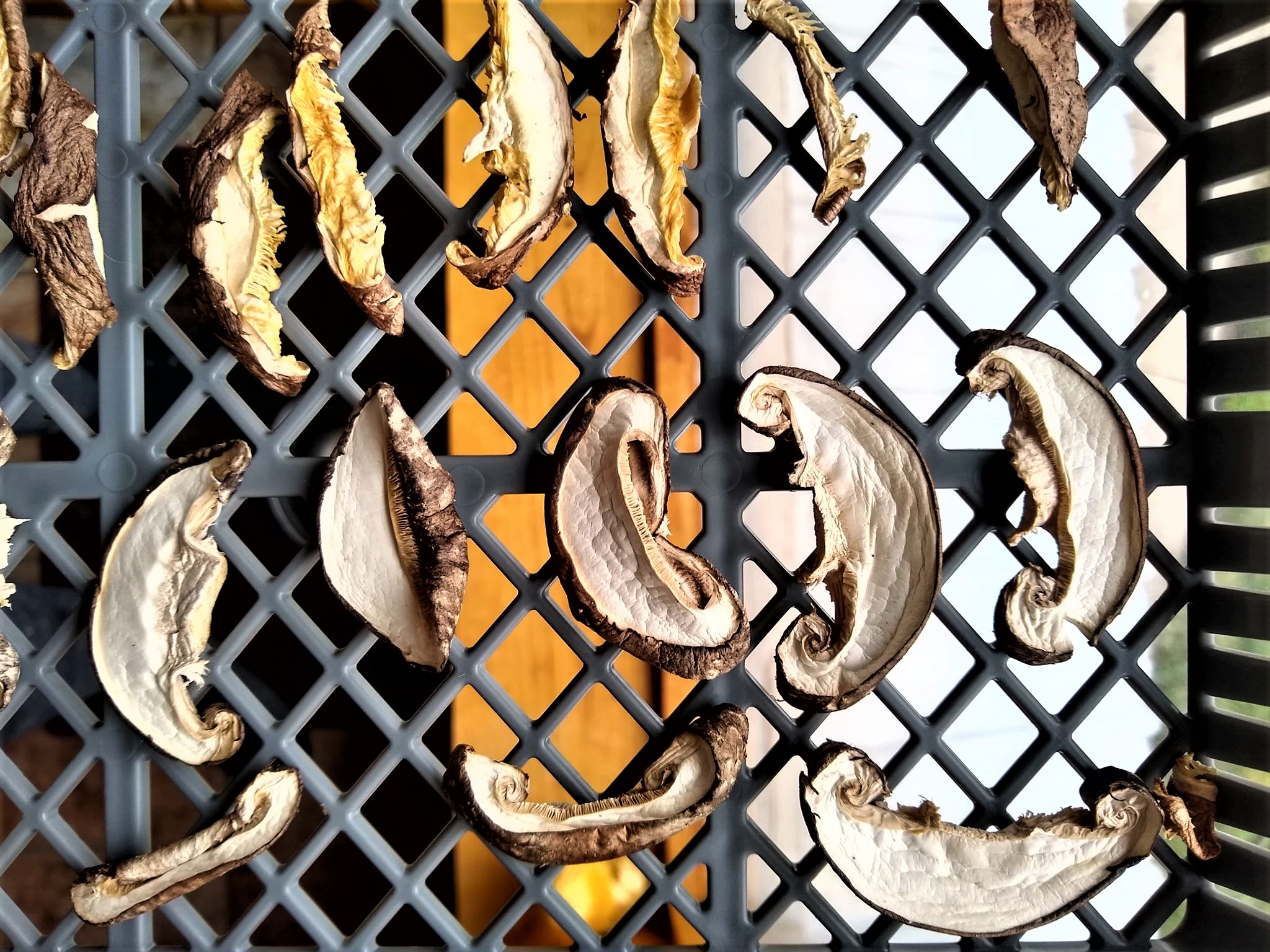 Dried Shiitakes | Iowa Herbalist